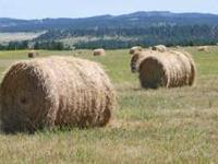 2011 Crop High Quality Mixed Grass Hay for Sale. Round