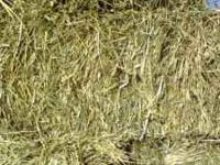 200 Bales of Mixed hay --- Timothy, Orchard grass, Red