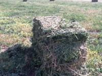 We have about 200 bales of 1st cut Alfalfa baled, had t