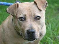 #2079's story This sweet girl is VERY SHY and needs a