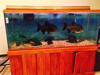 We are selling our complete tank with stand, fish,