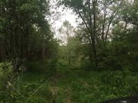 15.76 acres +/- that is perfect in every way! Tillable,