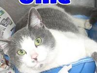 #23 Ollie's story 'Hello. I'm Ollie and I was