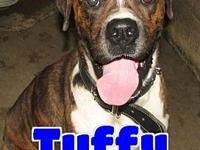 #235 Tuffy's story 'Hello there. My name is Tuffy and