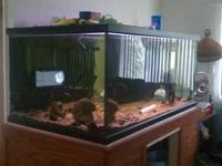 we have a 250gallon freshwater aquarium for sale. it is