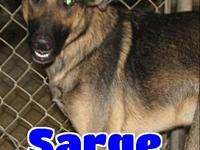 #251 Sarge's story 'Hello there! I'm Sarge and I'm one