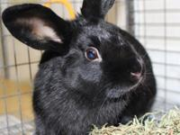 Moses is a handsome 5 month old male rabbit. He has a