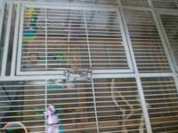 23 Parrolets different age and female and males (8