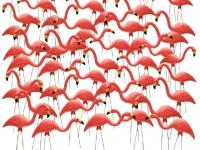 You've Been Flocked by 50 Flamingos! A true piece of