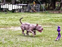 Bully Max Muscle Supplements for Dogs Bully Max is the