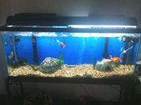 29 Gallon Aquarium. Brand new in box. Includes