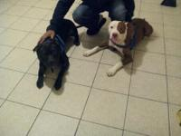 I have to friendly pitbulls must go they have all shots