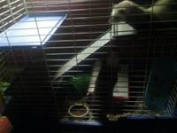I have 2 ferrets looking for a loving and forever home.