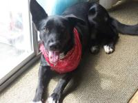 2yr.old male neutered dog, border collie/shepherd mix.