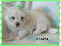 Meet cutie pie Casper! He is gorgeous! We are pleased