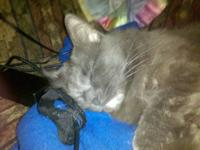 I'm offering 3 adult cats. 2 are gray tabby. 1 male who