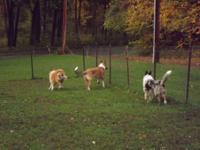 HI,. I have actually 3 AKC signed up Collies for sale.