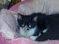 I have 3 - 8 wk old kittens that I have hand fed & been