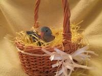 Sweet, social, lovable Pacific Parrotlets ready to go -