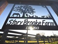 SEE VIDEO IN MEDIA PAGE OF STORY BROOKE FARM IN