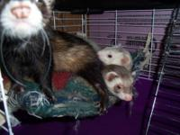 i am selling my ferret cage that will come with 3 free