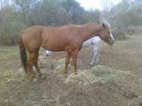 Have have 3 horses for sale First pj regestered mare