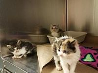3 Kittens (Meghan Garrett)'s story Please contact us at