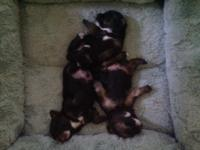 Adorable male triplets, Topper, Tanner and