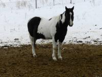 Double S Equine Rescue has 3 beautiful mares that need