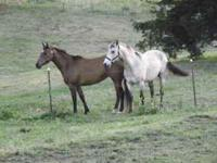I have 3 QH's for sale ranging from $500 and up. 1 QH