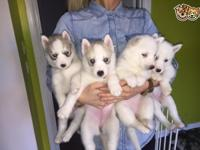 ** 2 white girls and 1 white boy **. Gorgeous husky