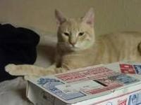 I have 3 boy cats in need of a loving home ASAP Frank-