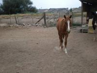 We have a 3 year old few spot POA pony filly that we