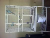 I have for sale a Blue Male Indian Ringneck with a
