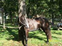 Lil Miss Huss is reg in the American Half QH Registry.