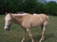 3 year old filly. Can be registered as a paint or