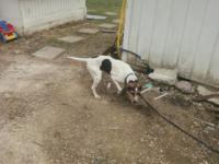 Description i have a 3 year old female treeing walker
