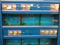 30 GAL. fish tanks w/shelving. Can stack 2-3 high. Self