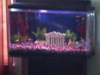 I'm selling my 30 gallon aquarium it has everything,