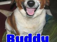 #3100 Buddy's story 'Hi there. My name is Buddy and I