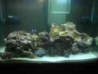 I have a turn key 35 gal salt water tank 2 fish,