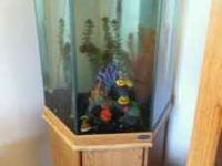 35 gallon octogon fish tank...great shape...holds