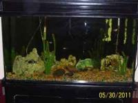 35 gallon fish tank with stand with everything inside