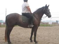 Kochan is a Baroque style Friesian cross black/grey