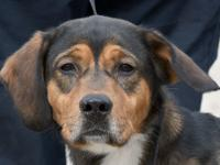 Two-year-old Elvis is an awesome hound dog. He loves to