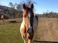 Hi, What we have here are 3 handsome gelding horses at