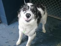 He is a playful and friendly gal.  Our kennels are