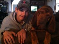 I have 4 adult bloodhounds for sale. 2 ladies and 2