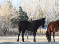 We have 4 beautiful registered yearling fillies. Come