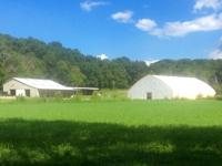 Gorgeous 608 acres commercial farm with 6 stall barn,